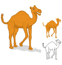 Camel cartoon character vector