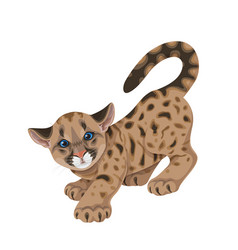 Cougar cub in motion isolated vector
