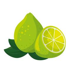 isolated acid lemon vector image