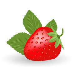 strawberry sweet fruit isolated on a white vector image