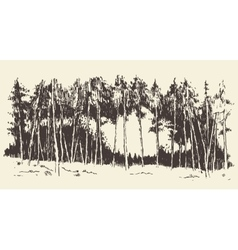 Hand drawn landscape fir forest meadow vector