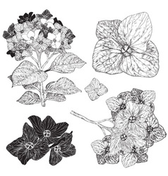 Sketch Set of Flowers vector image vector image