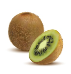 Close-up kiwi and kiwi slices vector
