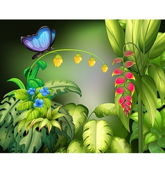 Butterfly and flower vector image vector image