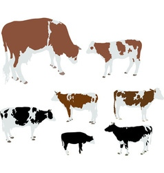 cows and calfs color vs vector image