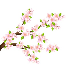 Sakura branch isolated vector image