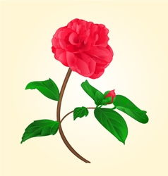 Camellia japonica flower with bud vector