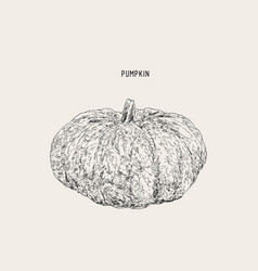 pumpkins paint hand drawn picture in cartoon vector image vector image