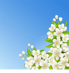 Sakura on the background of blue sky vector image vector image