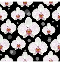 Seamless pattern with orchid flowers vector