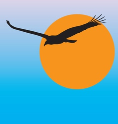 turkey vulture vector image vector image