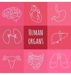 Icons of human organs vector