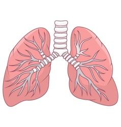 Human lung cartoon vector