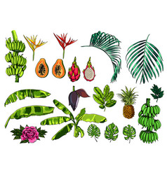 Tropical exotic leaves fruits and flowers vector