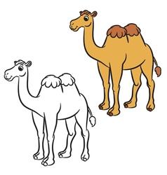 cute camel vector image vector image