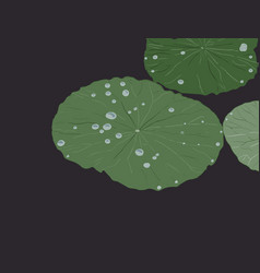Water drops on lotus leaf sketch vector