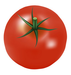 big ripe red fresh tomato with parsley isolated on vector image