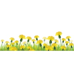 Dandelions flower isolated vector