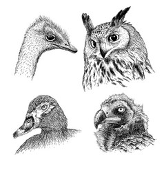 Realistic heads of wild birds vector