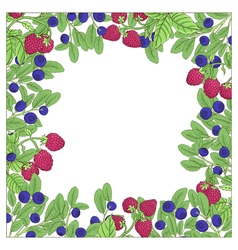 Berry square frame vector