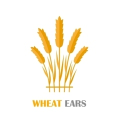 Wheat Ears Concept in Flat Design vector image vector image
