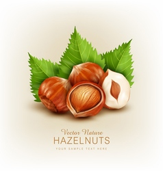 Hazelnut isolated element for design vector