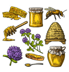 Honey set jars of honey bee hive clover vector