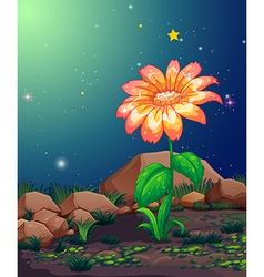 A beautiful blooming flower vector image vector image