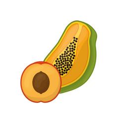 Papaya and peach delicious fruits vector