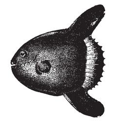 Sunfish vintage vector