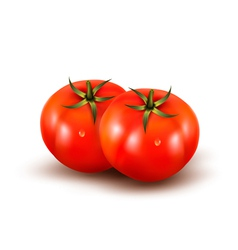 Tomatoes isolated on on white background vector image