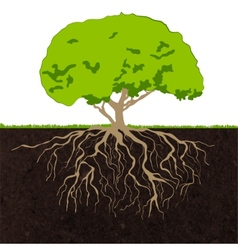 Tree roots sketch vector image vector image
