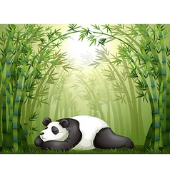 A panda sleeping between the bamboo trees vector image