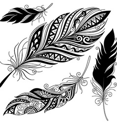 Peerless decorative feather vector