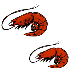 Fresh seafood shrimps icon on white background vector