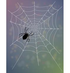 Spider web 06 vector