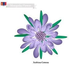 Scabiosa comosa national flower of mongolia vector