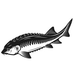sturgeon fish icon isolated on white background vector image vector image