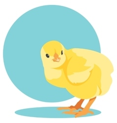 yellow newborn chick vector image
