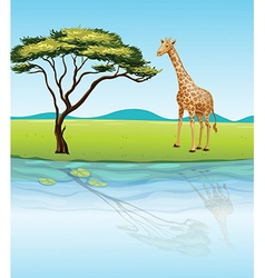 A giraffe beside the river vector image