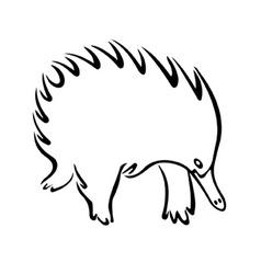 Echidna vector image