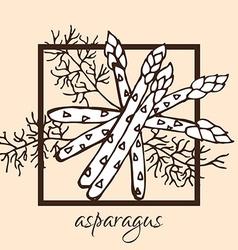 hand drawn asparagus vector image