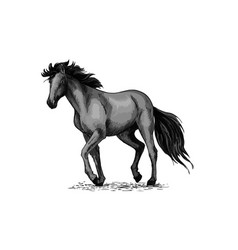 horse sketch of black arabian stallion vector image vector image