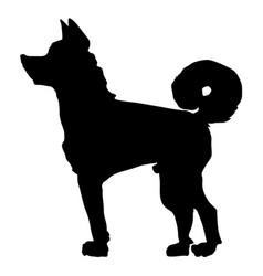 Japanese dog akita vector