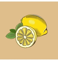 Lemon in vintage style colored vector