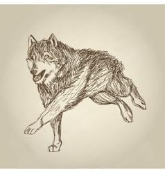 Wolf design Animal conceptWildlife animal vector image
