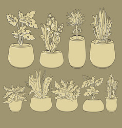 set of doodle house plants in ceramic pots vector image
