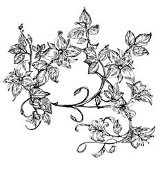 Vintage elegant flowers black and white vector