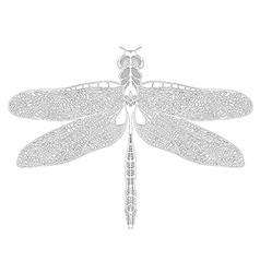 Hand drawn dragonfly on white background vector
