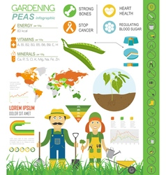 Gardening work farming infographic peas graphic vector